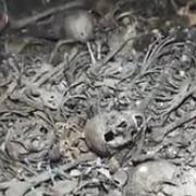 2018-04-30-VIDEO-00006438